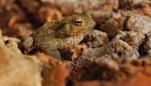 Biodiversity Frog